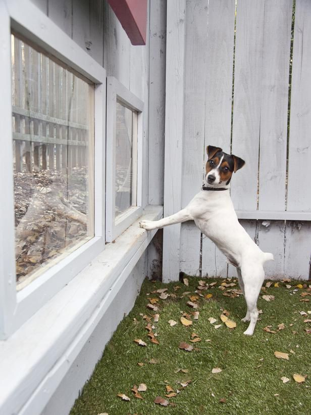 The dogs will need something like this in the wall of their dog room so they can see what's going on outside!