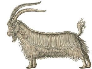 the Submission goat