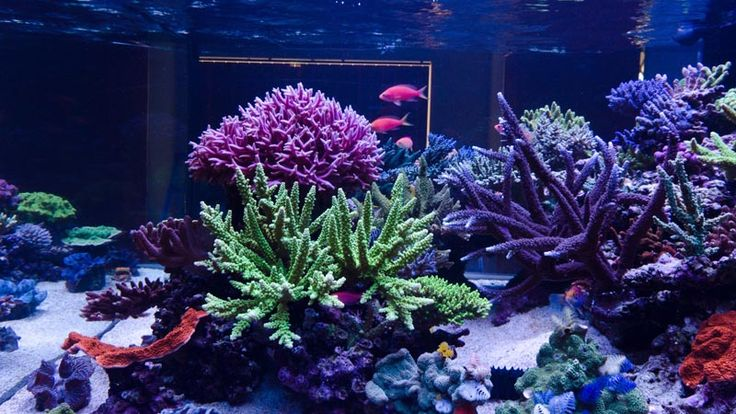 Reefkeeping Magazine - February 2014 Tank of the Month