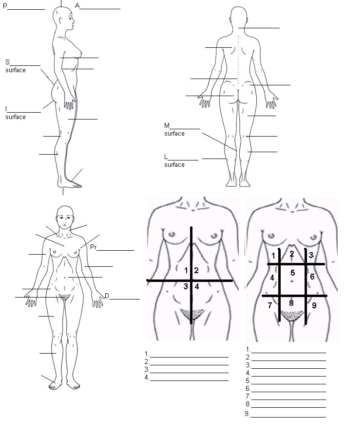 9 best Anatomy and Physiology Binders Worksheets images on ...
