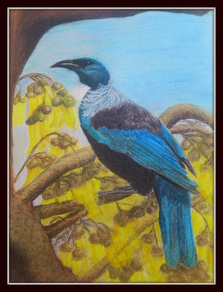 Just love the Tui which is a native song bird of NZ. We often see them in the Kowhai tree in out neighbours garden. I did this with chalk pastels pencils which are great for fine details.
