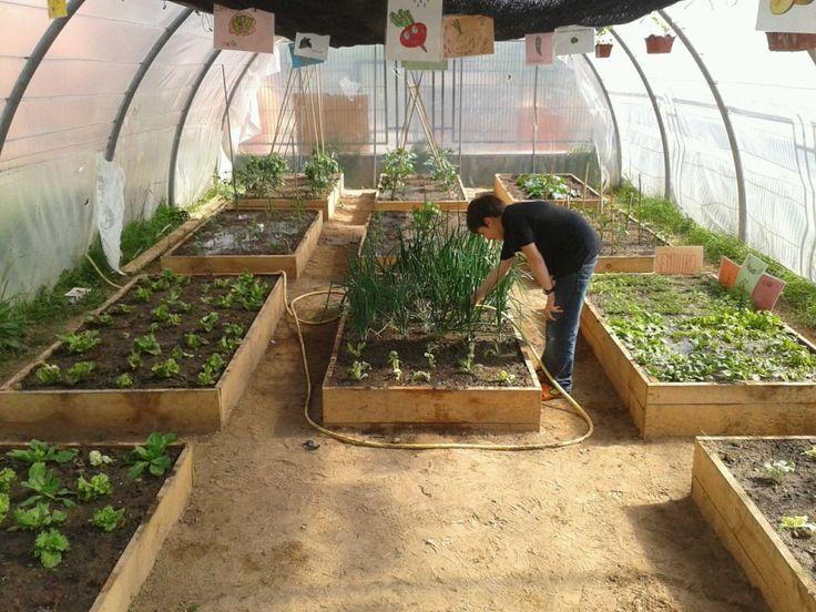 M s de 25 ideas incre bles sobre huertos escolares en - Invernadero casero terraza ...
