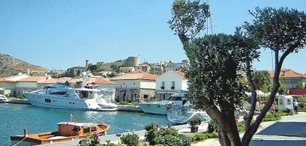 Olive tree and sea...Çeşme, İzmir, Turkiye
