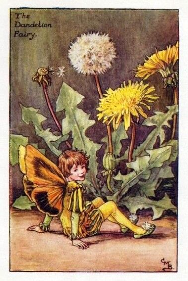 Dandelion Flower Fairy » Flower Fairy Prints- Vintage Fairy Prints by Cicely Mary Barker for sale