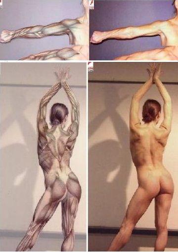 Скачать Анатомия человека для художника бесплатно