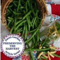 Canning/Freezing Green Beans