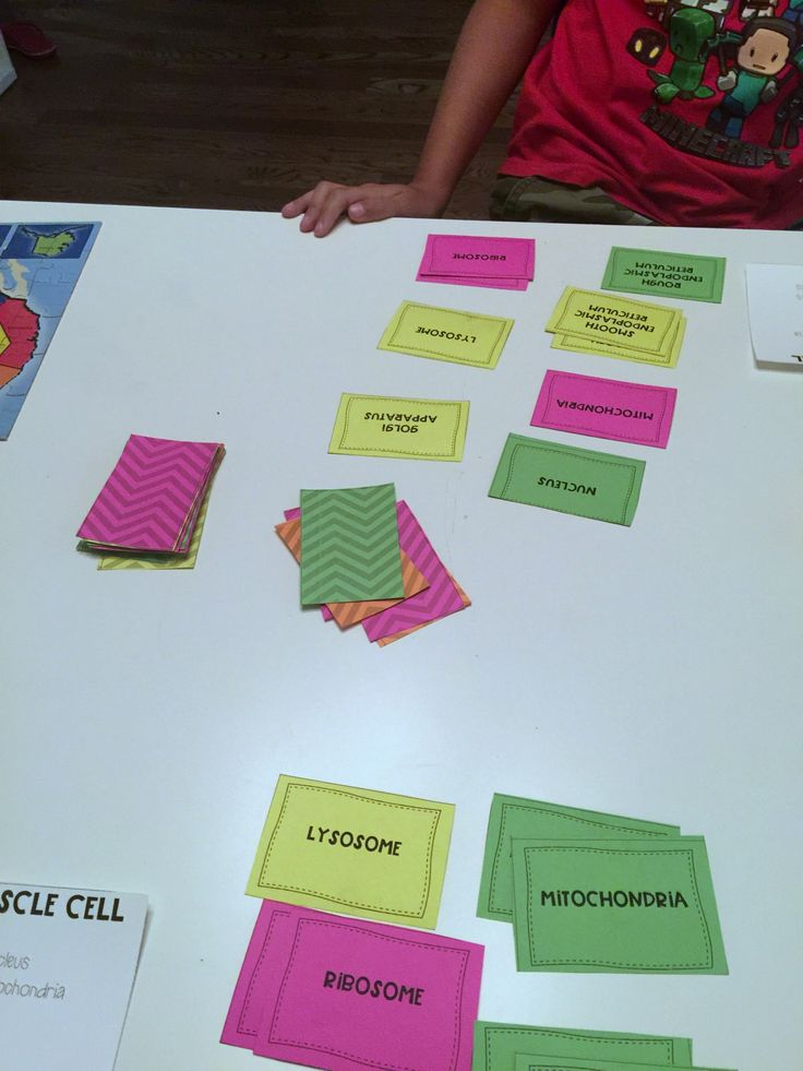 Cell diversity game that focuses on eukaryotic and prokaryotic cells and the diversity of those populations. Common cellular structures are used.