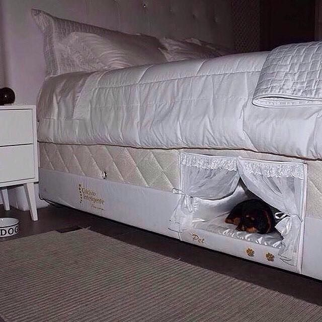 """I have to have it!"" – 27 ingenious and crass living ideas for dogs and cats! – Page 5 of 7"