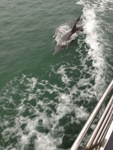 We all have fun in mandurah, including our local dolphins