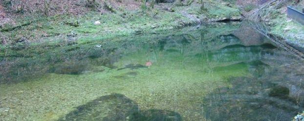 Source de l'Ain près de Nozeroy