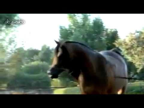 AMAZING video - will take your breath away. Polish #Arabian #Horses, Polskie Konie Arabskie