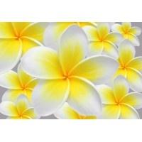033VE XXXL - Icke-Vävd / Non-Woven Fototapet Hawaiian Flower