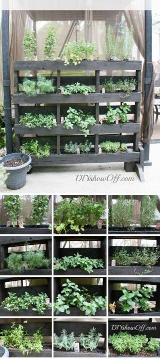 For those of us who don't have a lot of horizontal gardening space, here is a free-standing-vertical-pallet-herb-garden4