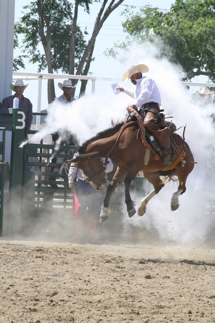 Images coyotes and coyotes hunting in tandem by matt knoth via - 1st Annual Jeremiah Ward Bronc Riding At Colorado Championship Ranch Rodeo 2011