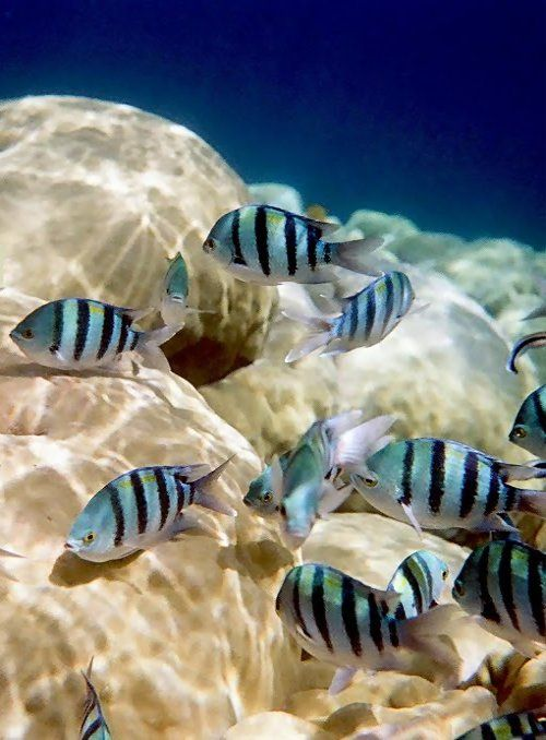 """""""Poetry Water"""".. Marsa Alam (Red Sea), Egypt // by Popi Braga on Panoramio"""