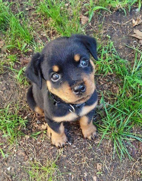 #dog #cachorro #cute #fofo #puppy #filhote
