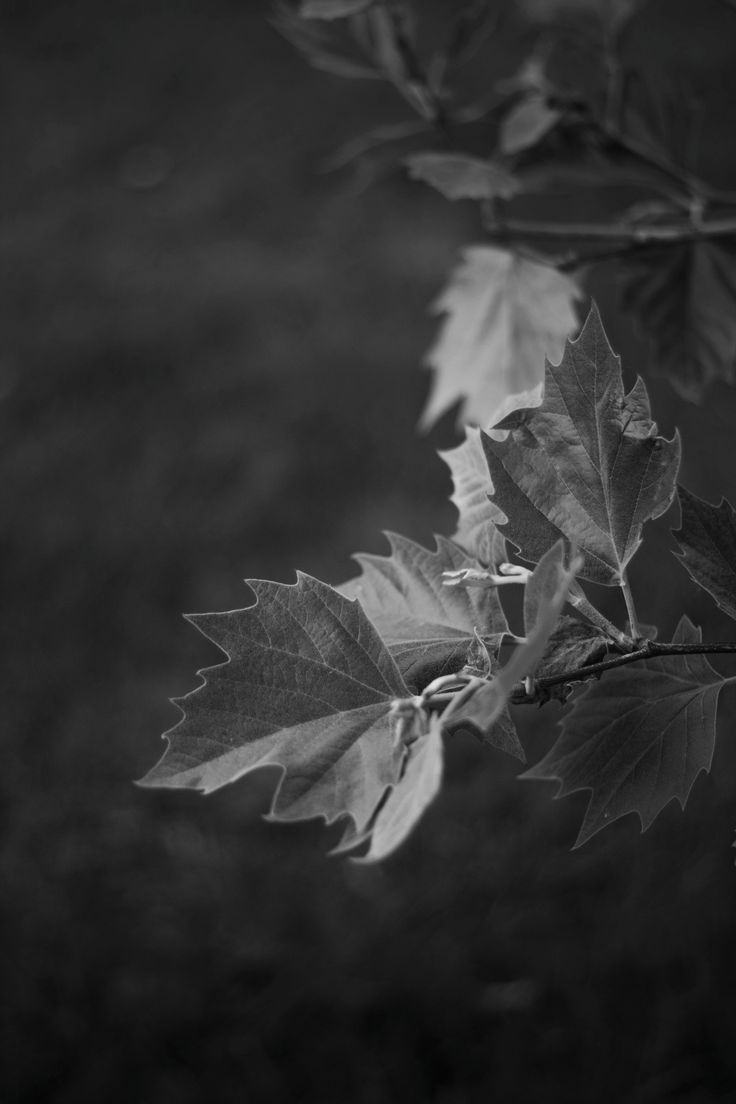 The black and white Leafs - The spring is not just about colors but the light too