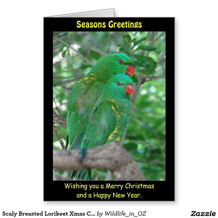 Scaly Breasted Lorikeet Xmas Card- Australian Wildlife. Click on photo to view item then click on item to see how to purchase that item. #christmascard #xmascard #lorikeet #scalybreastedlorikeet #wildlife #australianwildlife #zazzle