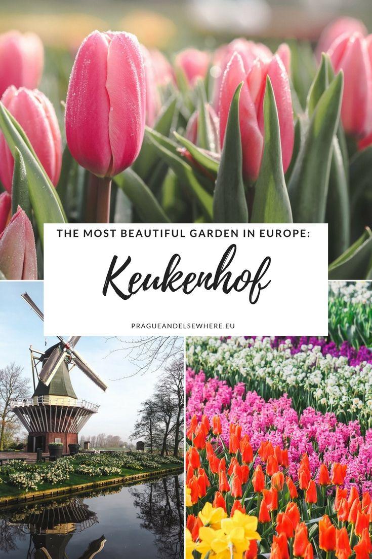 2135b22a86c3ff677b73f6c9ef164209 - Tours From Amsterdam To Keukenhof Gardens