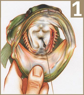 Gut Hooked Fish: Do They Survive? How To Remove The Hook