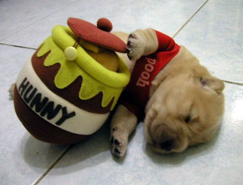 Winnie The Pooh Puppy   # Pin++ for Pinterest #
