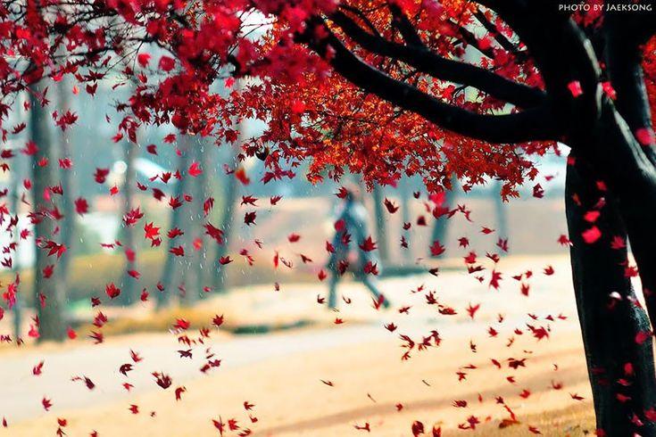 35 zdjęć udowadniających, że jesień to najbardziej kolorowa pora roku.