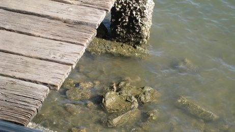 How to Build a Fixed Wooden Boat Dock thumbnail