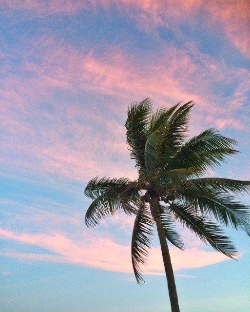 Céu rosa e azul e um coqueiro para coroa como uma estampa de verão!