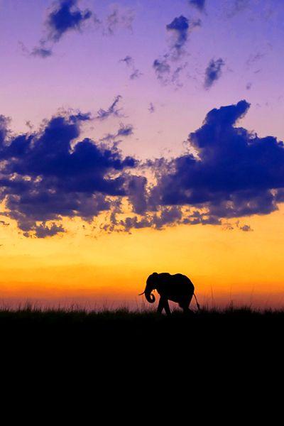 Sunset in Chobe River, Botswana, Africa