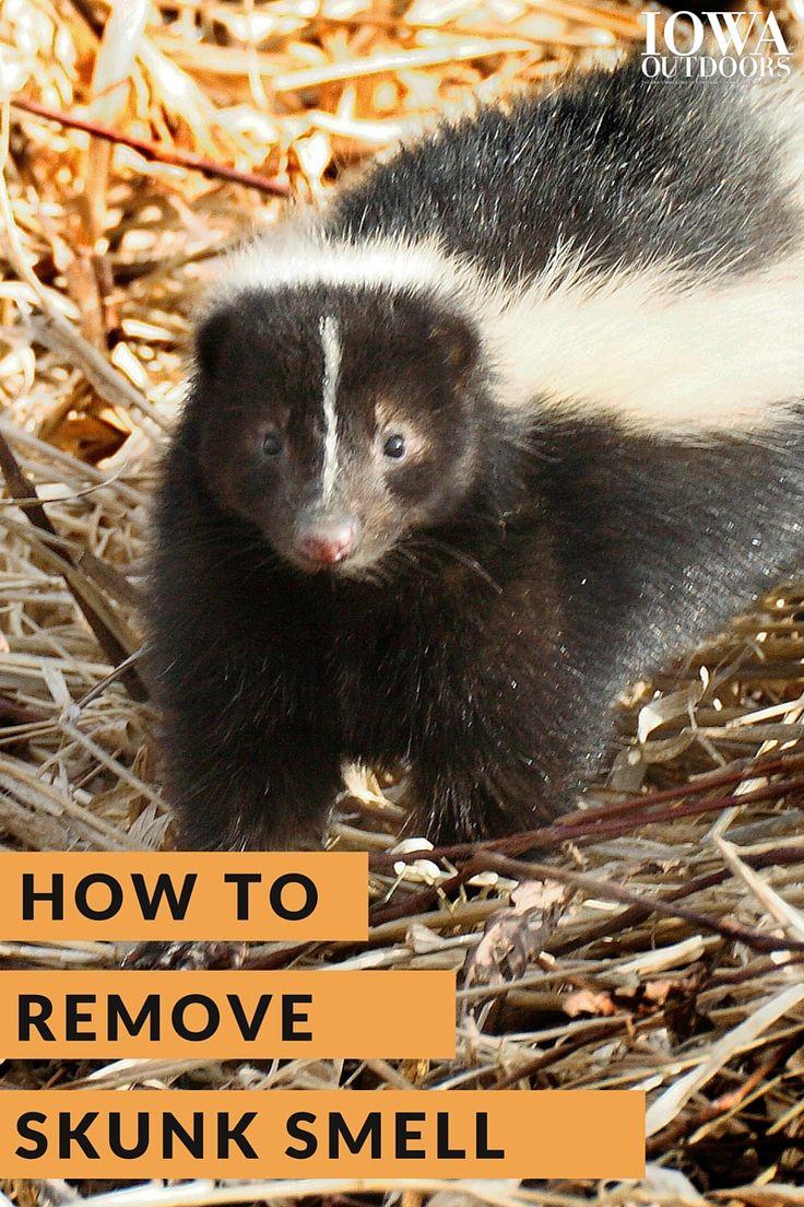 best 25 skunk spray ideas on pinterest skunk spray dog skunk
