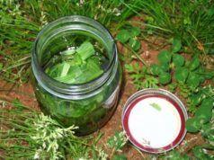 Tato rostlina léčí téměř všechny zdravotní problémy a roste na každém rohu. Věděli jste o ní?
