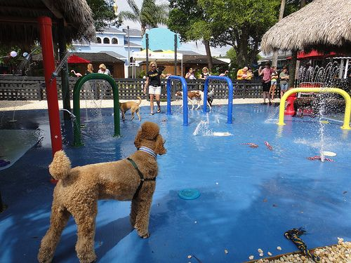 Water Park For Dogs In Florida
