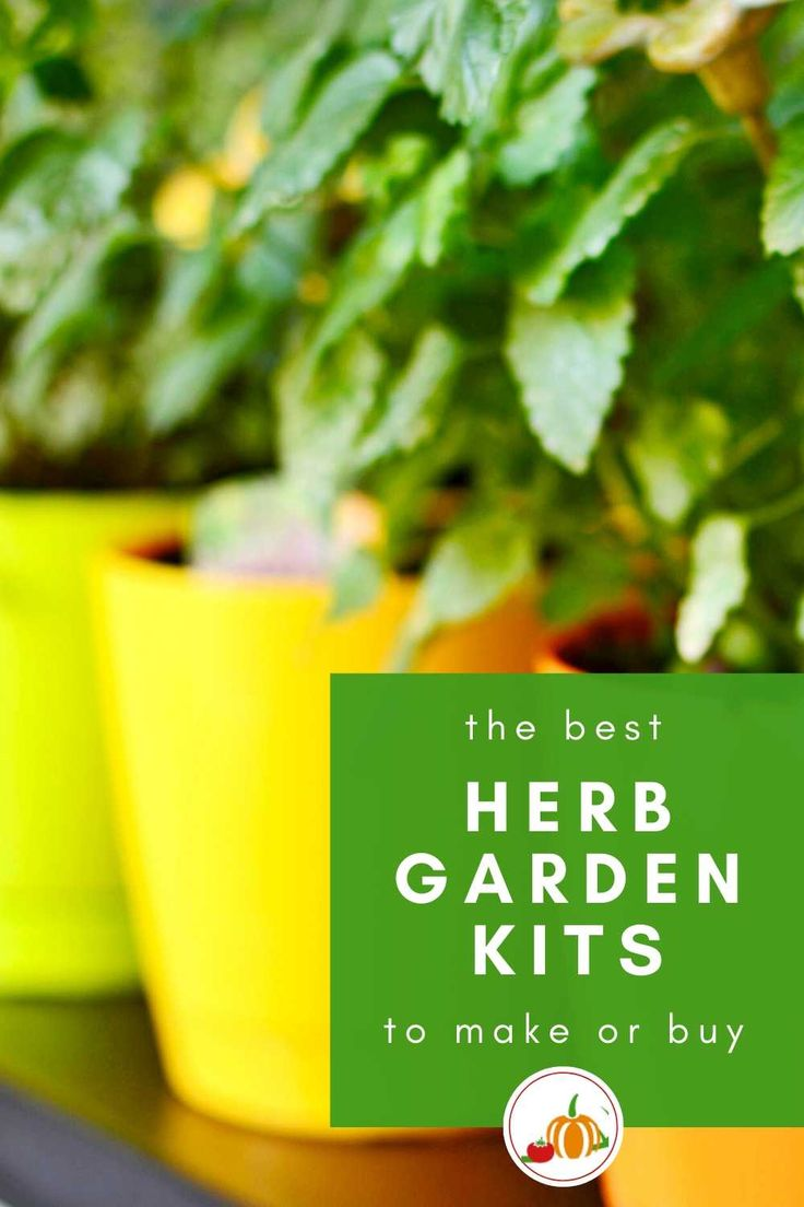 The Best Grow Your Own Herbs Kits in 2020 Growing herbs