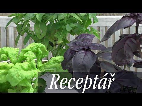iReceptářTV: Jak na bazalku. Zajistěte si bohatou úrodu - Užitková zahrada
