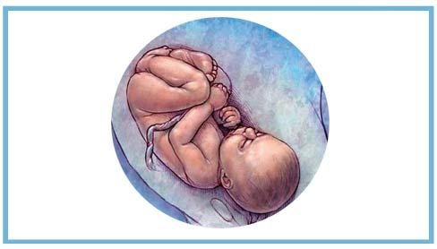 Drumul de la concepție la naștere în imagini