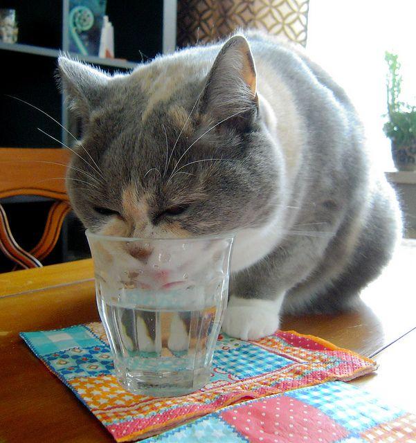 10 Signs of Diabetes in Cats http://theilovecatssite.com/10-signs-of-diabetes-in-cats/?utm_source=FB-Ad_Content_10Diabetes&utm_medium=link&utm_campaign=Ad_Content_10Diabetes