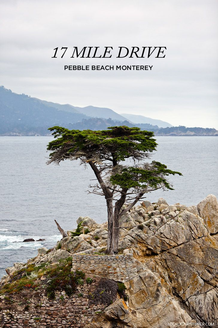 A Quick Guide to the Beautiful 17 Mile Drive Monterey California // localadventurer.com