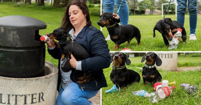 These Sausage Dogs Have Been Trained To Pick Up Litter On Their