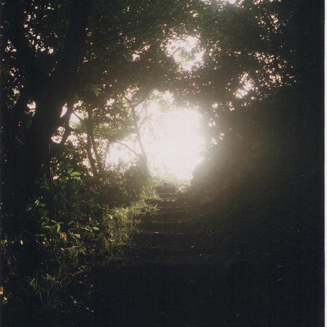 【iga73】さんのInstagramの写真をピンしています。《写真を撮りに行けない生活が続く 経理の理解に苦しむ毎日 . .  #鳥取 らへん #逆光 #林 .  #フィルム #film #filmcamera #filmlover #camera #ローライ35 #rollei35 #photo #analog #analogcamera #レンジファインダー #過去の写真 #フィルム #フィルム写真普及委員会 #35mm #ファインダー越しの私の世界 #フィルムに恋してる #instagood #instaphoto #reco_ig  #team_jp_ #indies_gram #東京カメラ部 #instagramjapan》