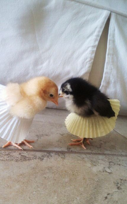chicklets in cupcake paper tutus