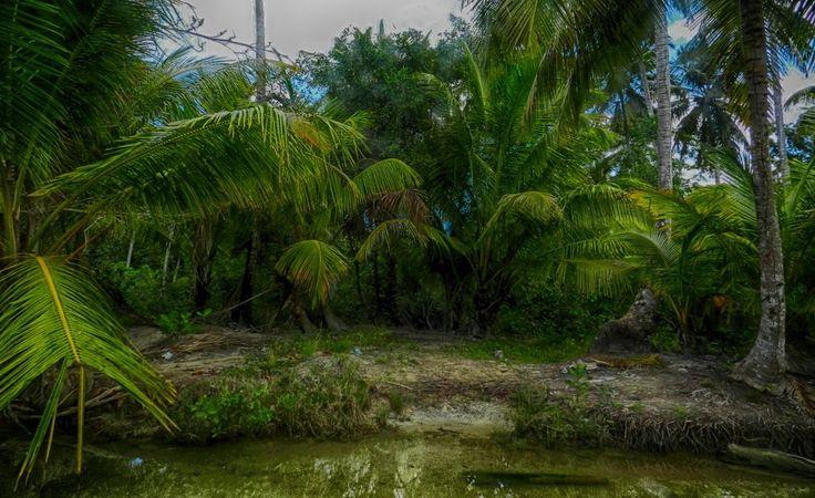 А вот почти 3D. Там, где река из джунглей впадает в океан.