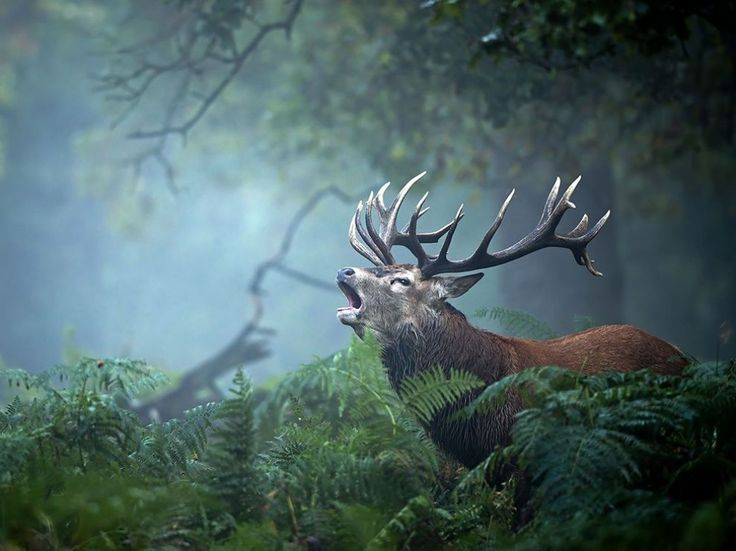 15 of the absolute best photos from National Geographic