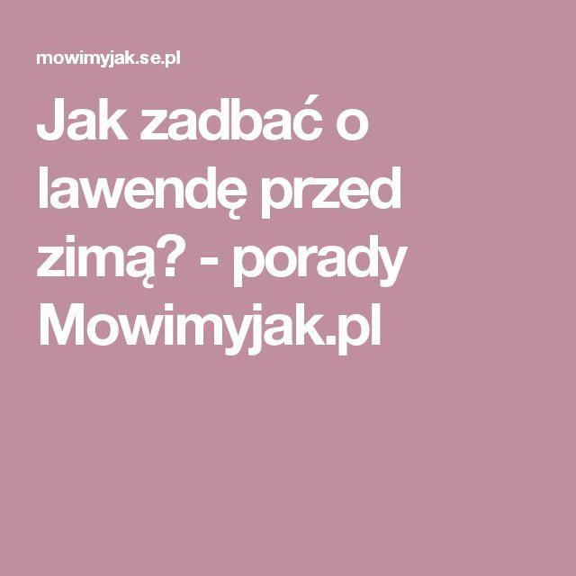 Jak zadbać o lawendę przed zimą? - porady Mowimyjak.pl