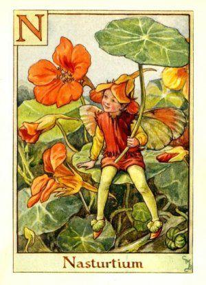 Nasturtium Flower Fairy Alphabet Print c.1940 Fairies by Cicely Mary Barker