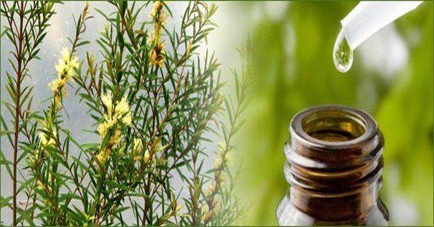24 überraschende Anwendungsmöglichkeiten für Teebaumöl