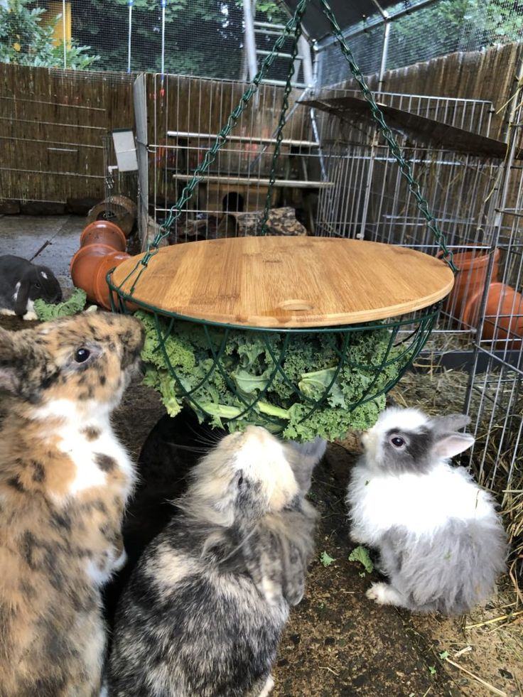 Outdoor enclosure and stable – rabbit clan