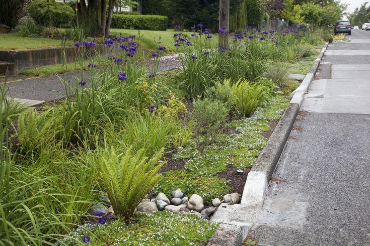 339 best swales images on pinterest rain garden water. Black Bedroom Furniture Sets. Home Design Ideas