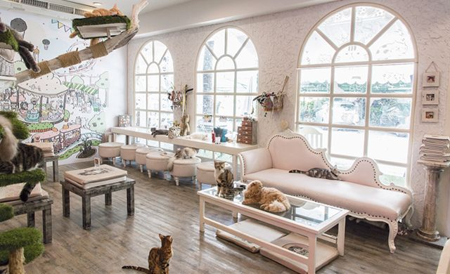 The Best Cat Cafes in the World