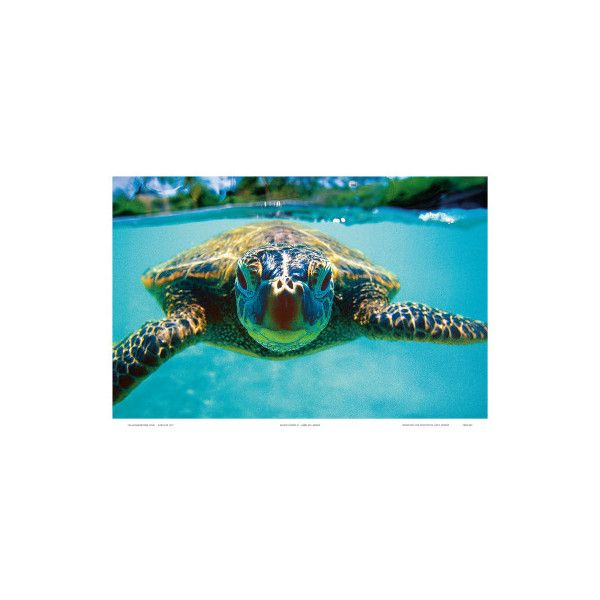 Honu Hawaiian Sea Turtle Wall Art Print 35 Liked On