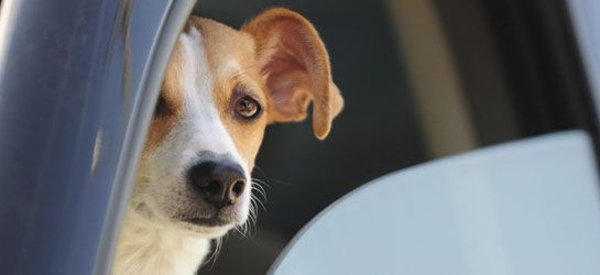 It Takes Only Minutes: Please Don't Leave Pets in Hot Cars!: Leaves Pet, Smart Pet, Pet Safety, Window, Pets Suffering, Pet Parents, Pet Locks, Pets At Home, Pet Suffering